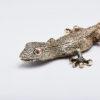 Coupe papier salamandre, BENNETON GRAVEUR
